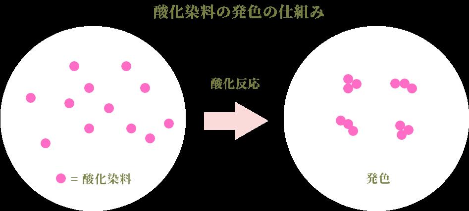 酸化染料の発色の仕組み